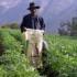 El financiamiento de estos proyectos es sin retorno y se encuentran enmarcados en la política agraria del Gobierno, para promover un adecuado desarrollo de la agricultura peruana.